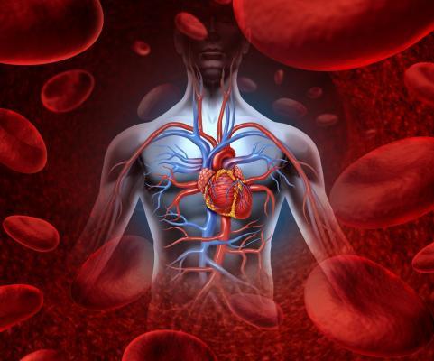 Аневризма аорты сердца: что это такое?