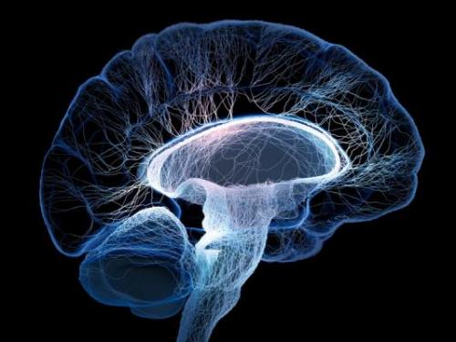 Сосуды головного мозга: симптомы, лечение, народные средства