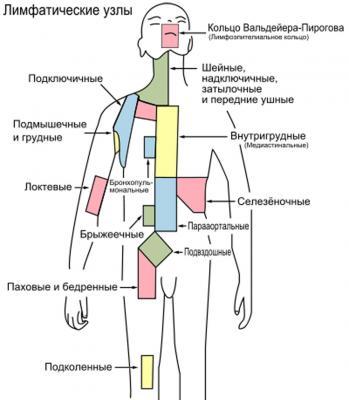 Лимфаденит паховый: симптомы у женщин и мужчин, фото