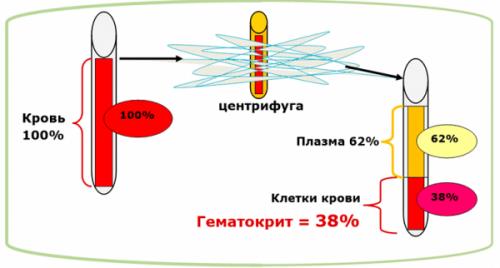 Как определяется гематокритное число