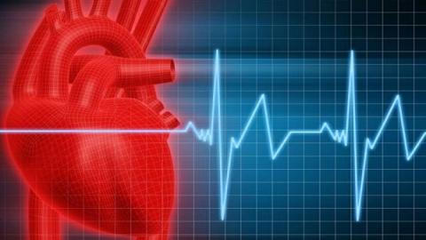 Сердце и пульсограмма
