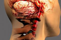 Венозная дисциркуляция