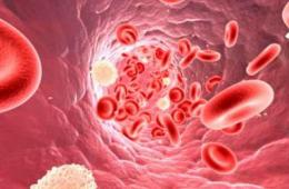 Кровеностные сосуды